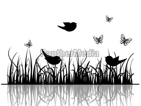 pajaro flor planta aves verano veraniego