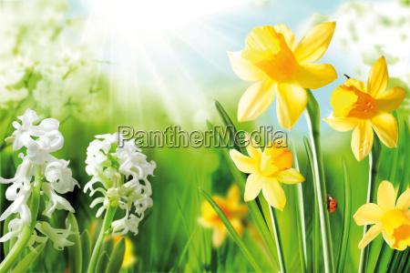 alegre bulbos de primavera