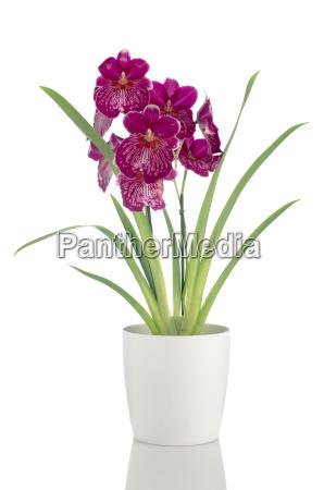 flor planta flores exotico petalos tropical