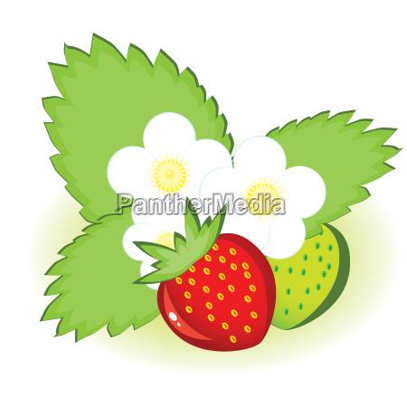 fresas maduras y verdes con flores