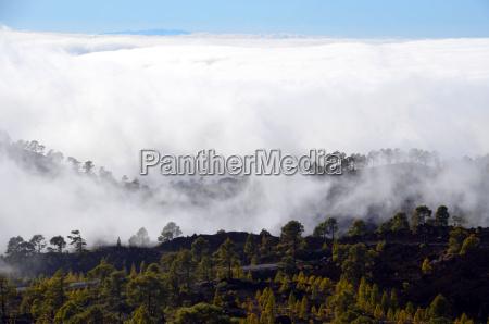 arbol arboles niebla tenerife cielo naturaleza