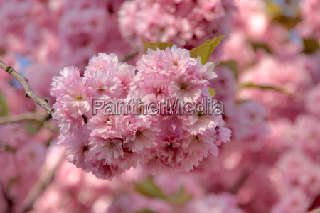 iglesia de las flores japonesas