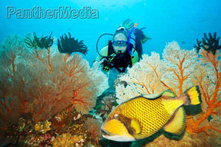 triggerfish y submarinista