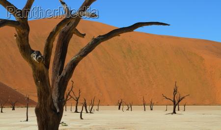muerto vlei namibia