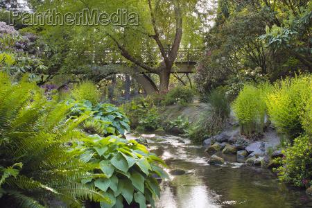 stream under the wooden bridge