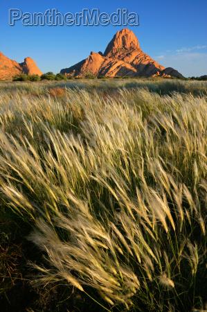 namibia hierbas las plantas del mundo