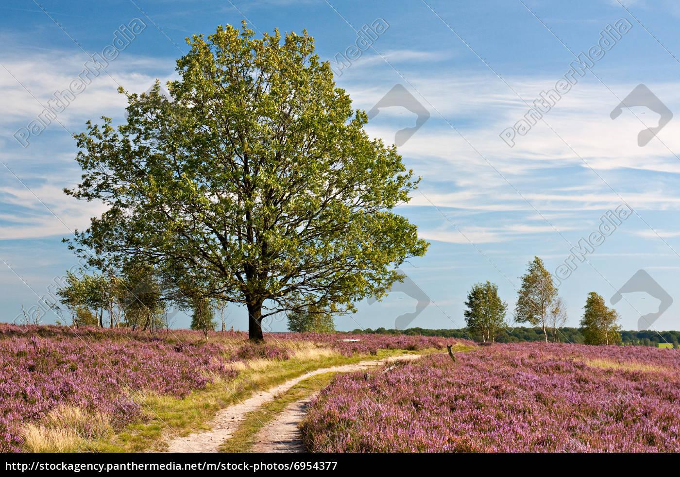 lüneburg, camino, a, través, del, paisaje, de - 6954377