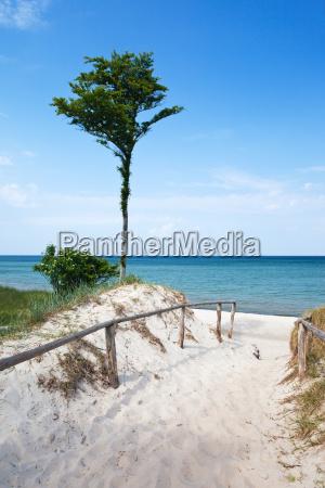 baltic darss beach