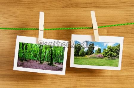 bosque en los marcos de cuadros