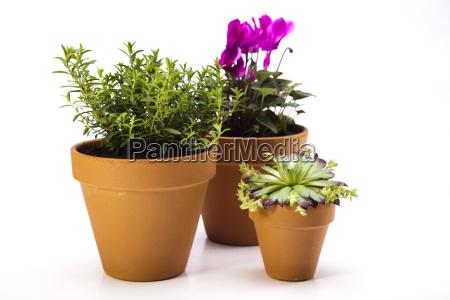 equipos de jardineria con plantas