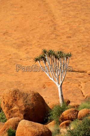 arbol rocas rock aloe paisaje naturaleza