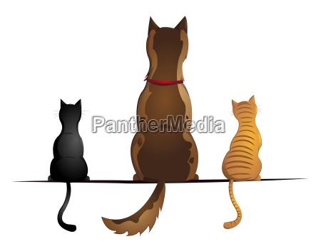 perro con dos gatos