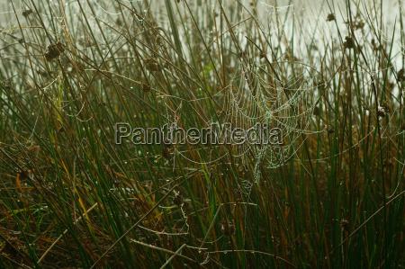 spider webs in the bog