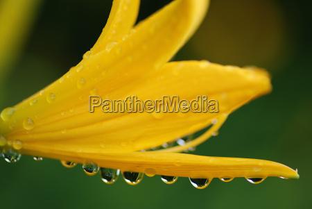 verde flor gotas de agua gota