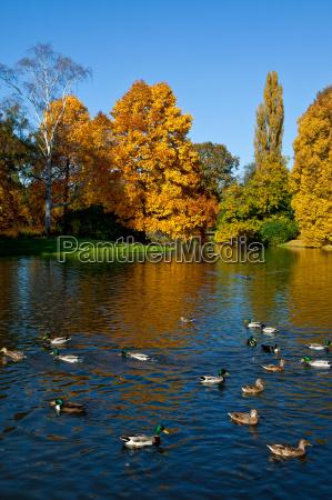 en, el, estanque, de, patos - 8092710