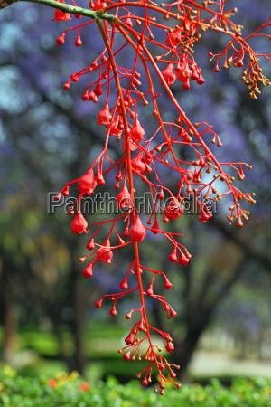 africa namibia australia rojo
