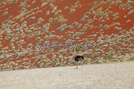 africa namibia duna arenas arena rojo
