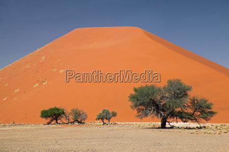 arbol africa namibia duna arenas arena