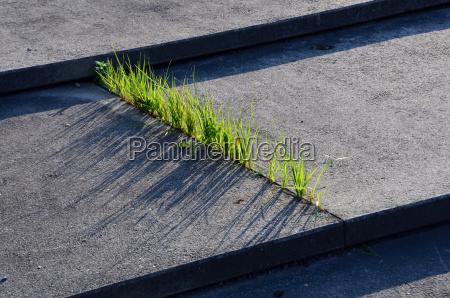 hierba y hormigon