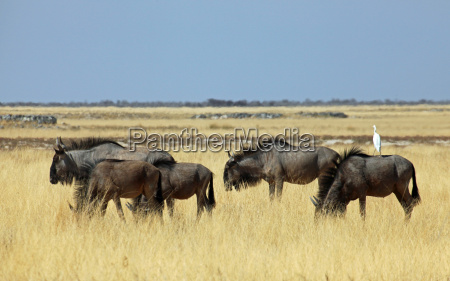 africa namibia safari