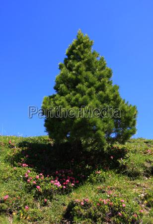 arbol montanyas planta pino flor flores