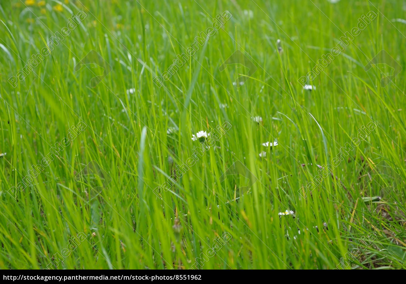 green, meadow - 8551962