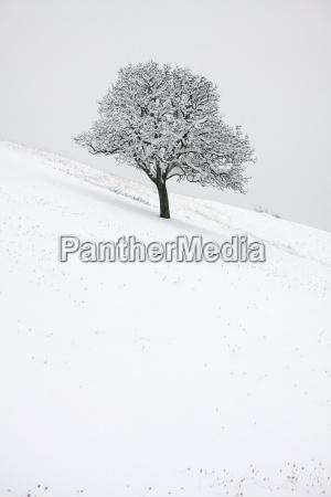 winter cold snowy oak blanket of