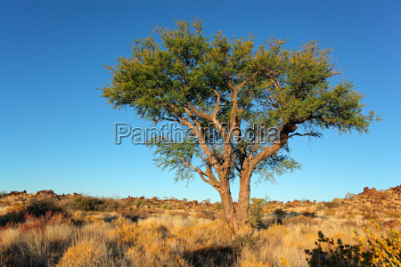 azul medio ambiente arbol desierto salvaje