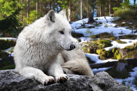 medio ambiente animal los animales fauna