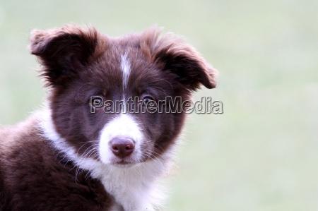 mascotas los animales perro perros