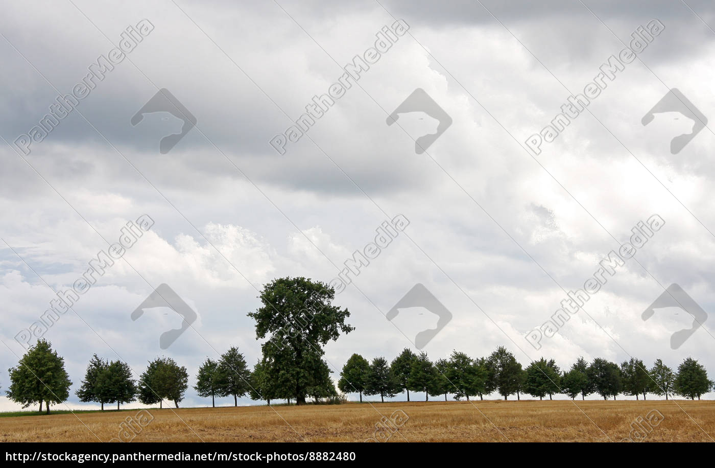 árbol, árboles, campo, verano, veraniego, camino - 8882480