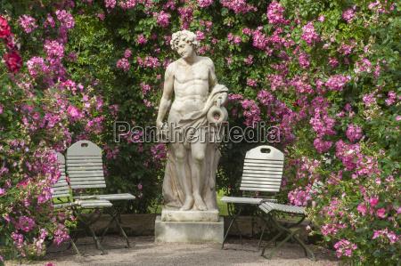 rose novedad jardin baden baden
