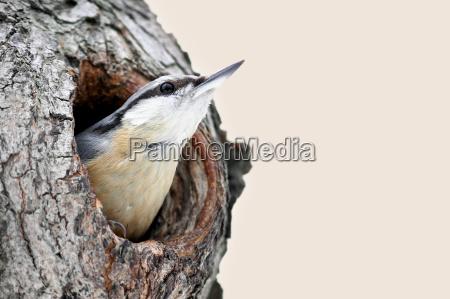 medio ambiente pajaro los animales aves