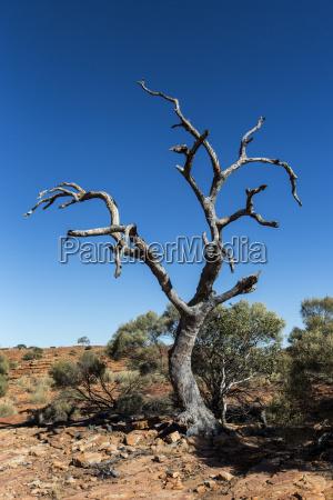 desierto australia seco muerto murio