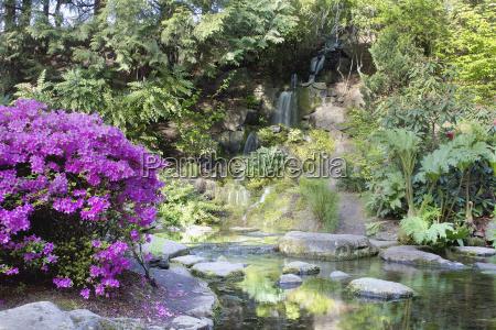 azaleas blooming by waterfall