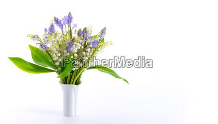 flor planta caucasico primavera lirio de