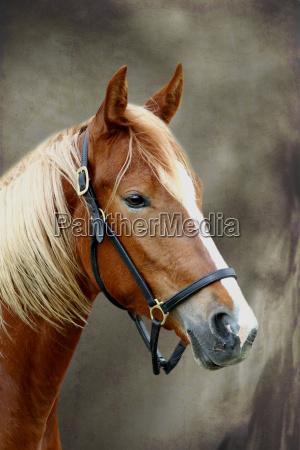 medio ambiente caballo animal los animales