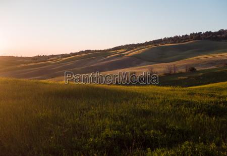 orange colored field in tuscan landscape