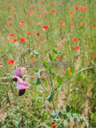 wild flower in a field of