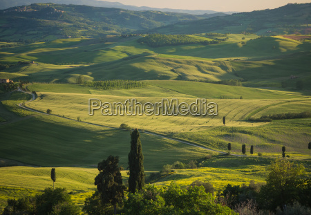 green fields in tuscan landscape at