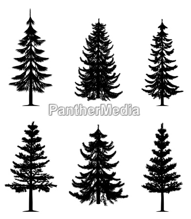 pine trees collection vector eps
