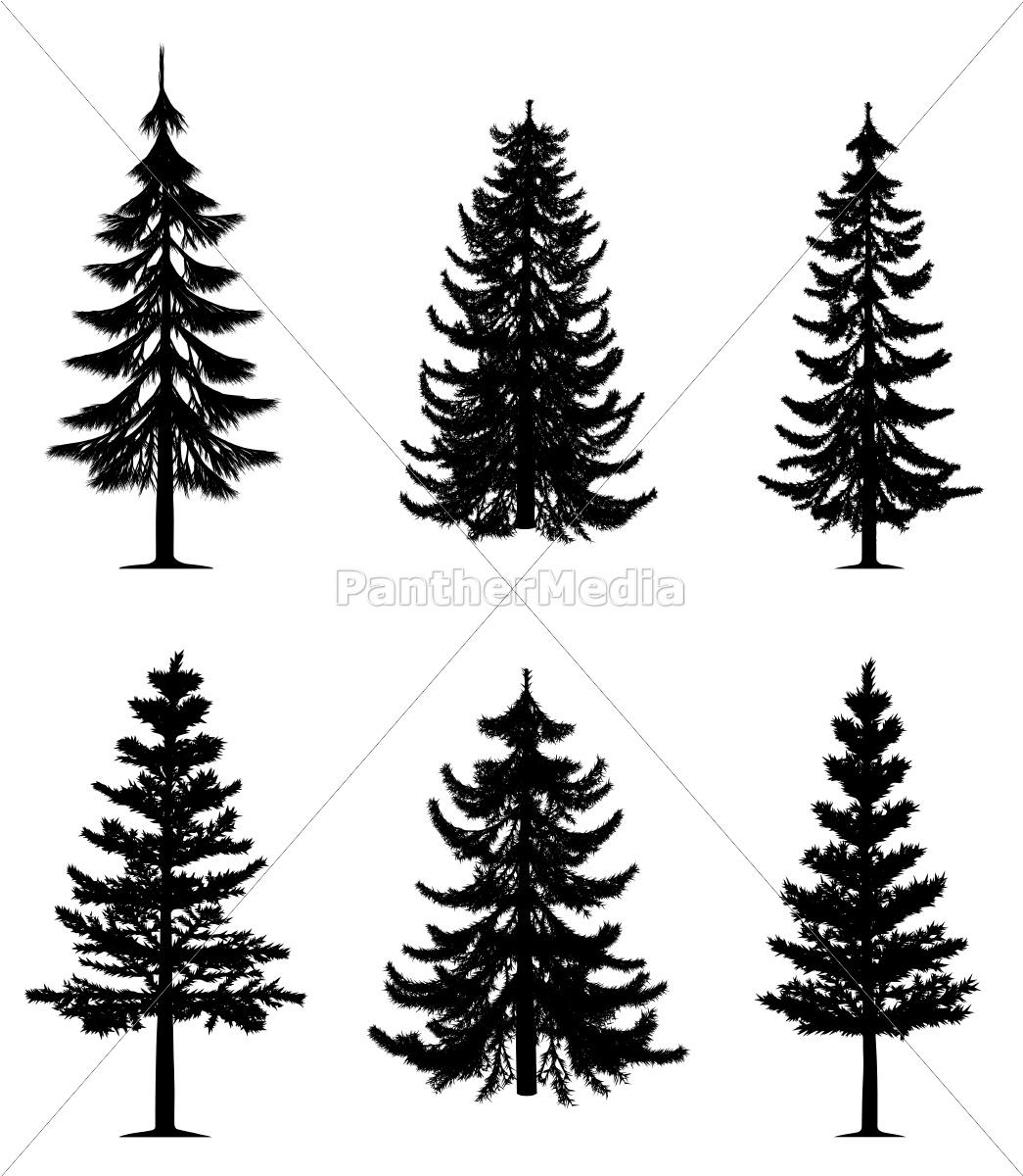 colección, de, los, árboles, de, pino - 9481388