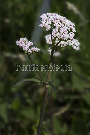 luz primer plano flor planta soleado