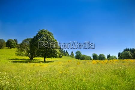 escena rural idilica con prado verde