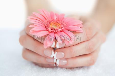 manos manicuras francesas sosteniendo la flor