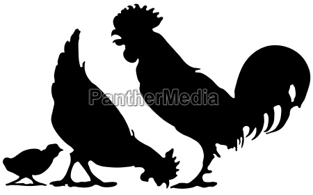 opcional silueta granja pollo pollos gallo