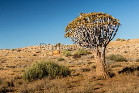 desierto turismo africa namibia conservacion de