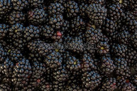 jardin negro frutas estimular espinas fruta