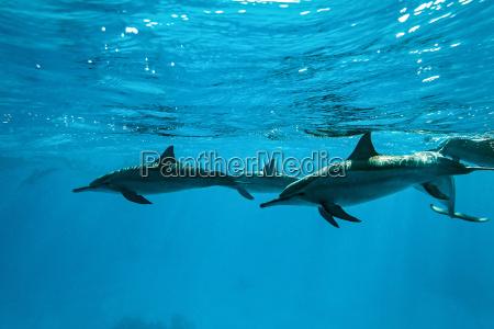 delfin submarino botella inmersion buceo las