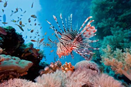 pescado submarino fauna arrecife agua de